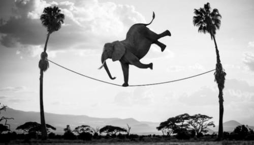 ElefanteEquilibrista.jpg