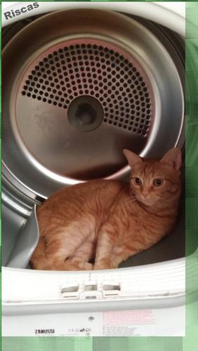 gato-a-aquecer.jpg