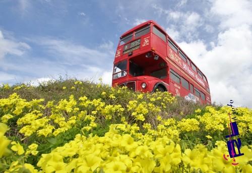Autocarro da Sical dá nas vistas...