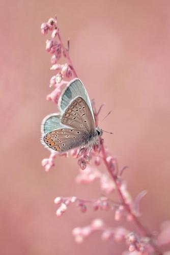 M rio quintana o segredo n o cuidar das borboletas e for Mural dos sonhos o segredo