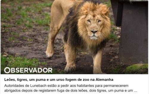 leos.png
