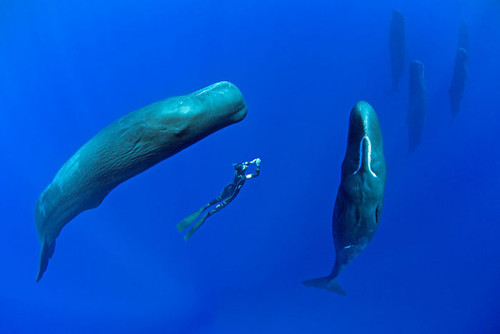 sperm-whales-sleep-franco-banfi-2-5968931f1da2a__7
