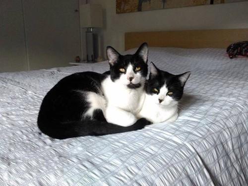 twocats.jpg