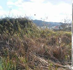 matagal cuf.png