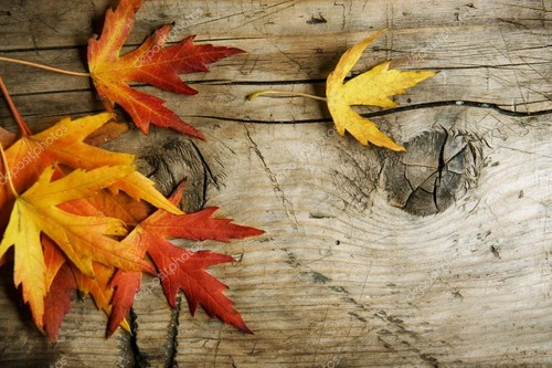 depositphotos_10676959-stock-photo-autumn-leaves-o