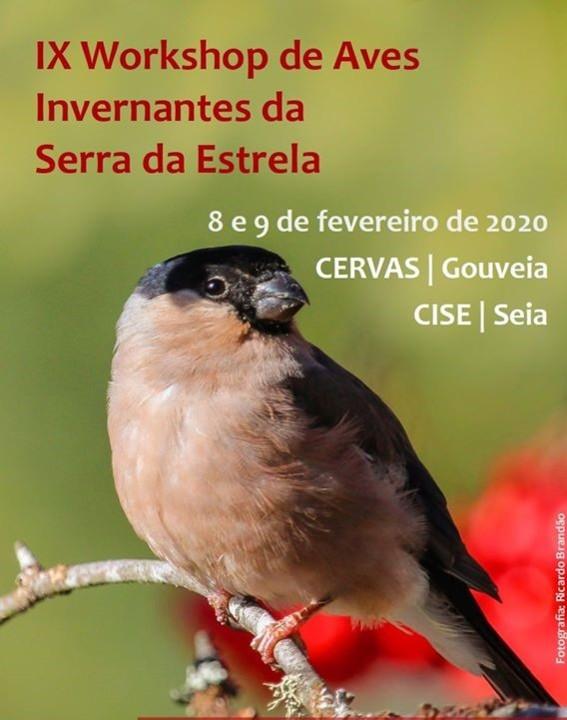 Aves Invernantes .jpg