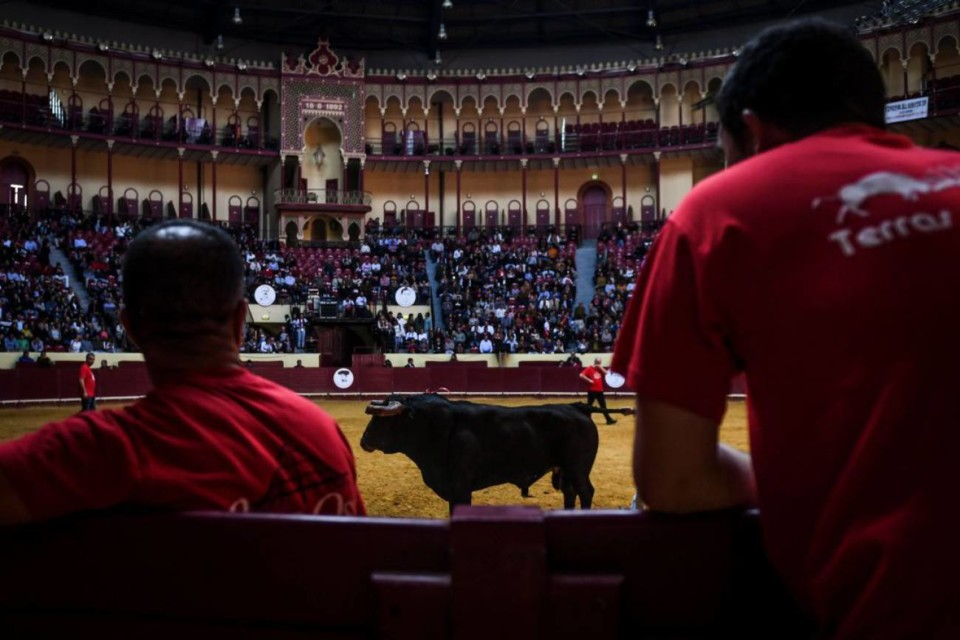 TOROS1560868236_101781_1560868694_noticia_normal_r