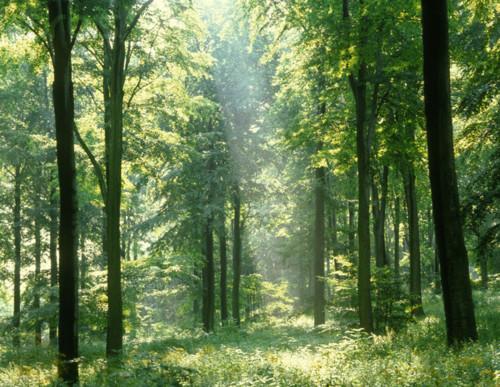 plantas-e-luz.jpg