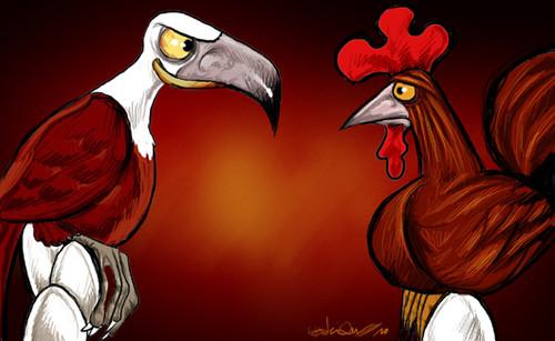 Aves chocas
