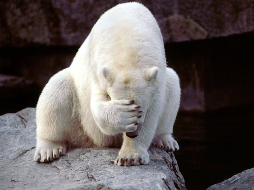 Polar Bear Facepalm.jpg