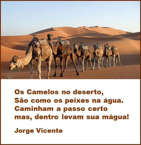Os Camelos.jpg