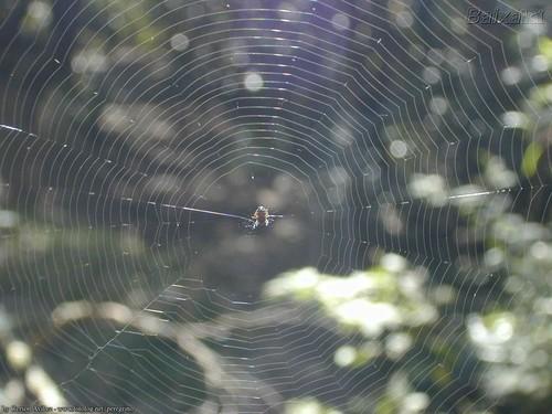 teia-de-aranha.jpg