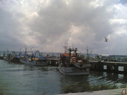 Barcos no Porto de pesca da Figueira da Foz