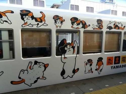 Comboio Tama