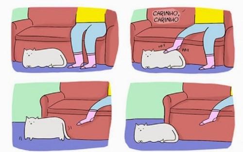 pobres-gatos-2yi7xrm1lwoxtqhd3jasxs.jpg