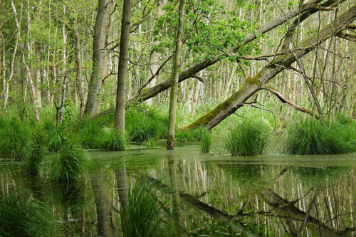 Forests_Swamp_Trees_467770.jpg