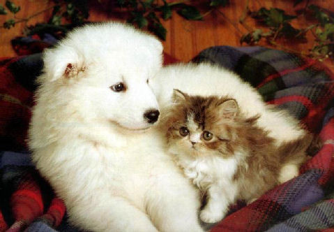 Fotos-de-cachorros-e-gatos-fofos