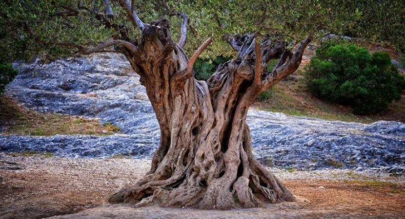 Os-Arcanjos-e-a-Árvore-da-Vida-830x450.jpg