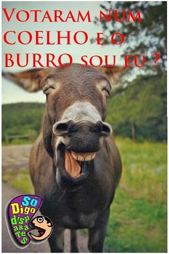 Votaram num Coelho e o Burro sou eu