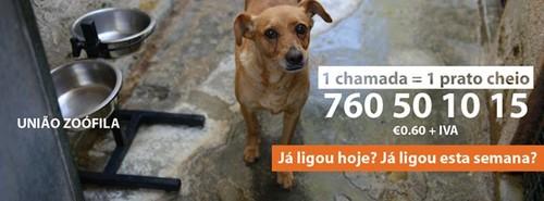 Imagem da Telefone Solidariedade.jpg