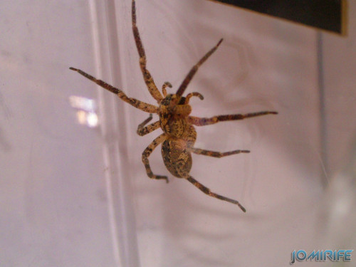 Aranha (1)