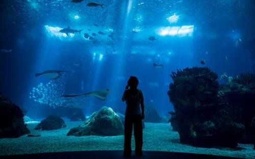 OCEANÁRIO DE LISBOA3.jpg