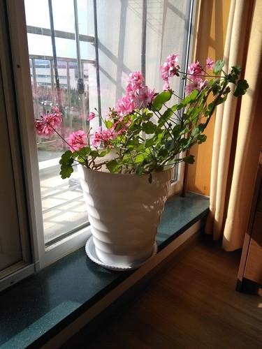 Planta_3