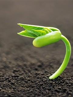 planta nasce.jpg