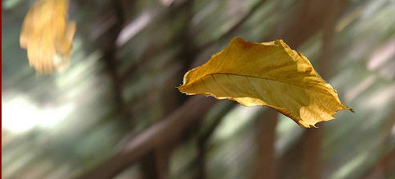 folha ao vento3.jpg