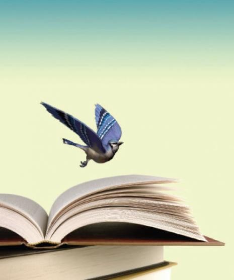 livro pássaro.jpg
