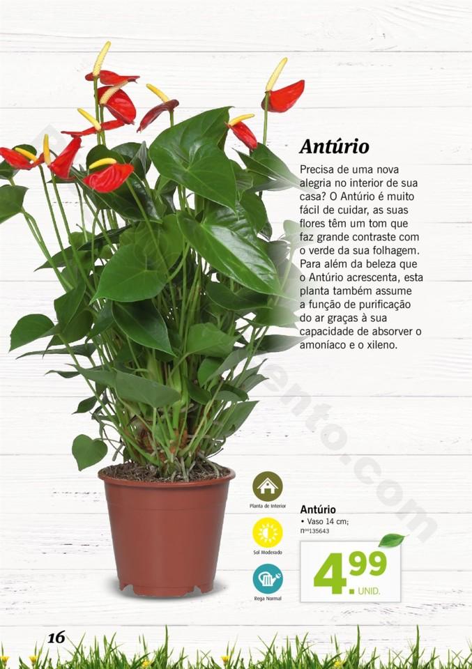 Mercado-de-Plantas-A-partir-de-04.04-01_015.jpg