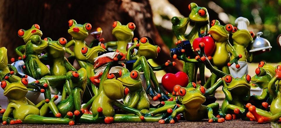 frogs-1364215_960_720.jpg