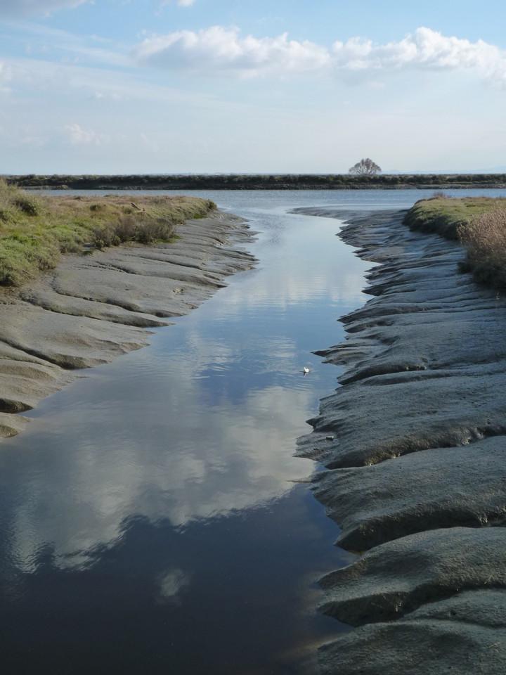 Parque Linear Ribeirinho do Estuário do Tejo (41)