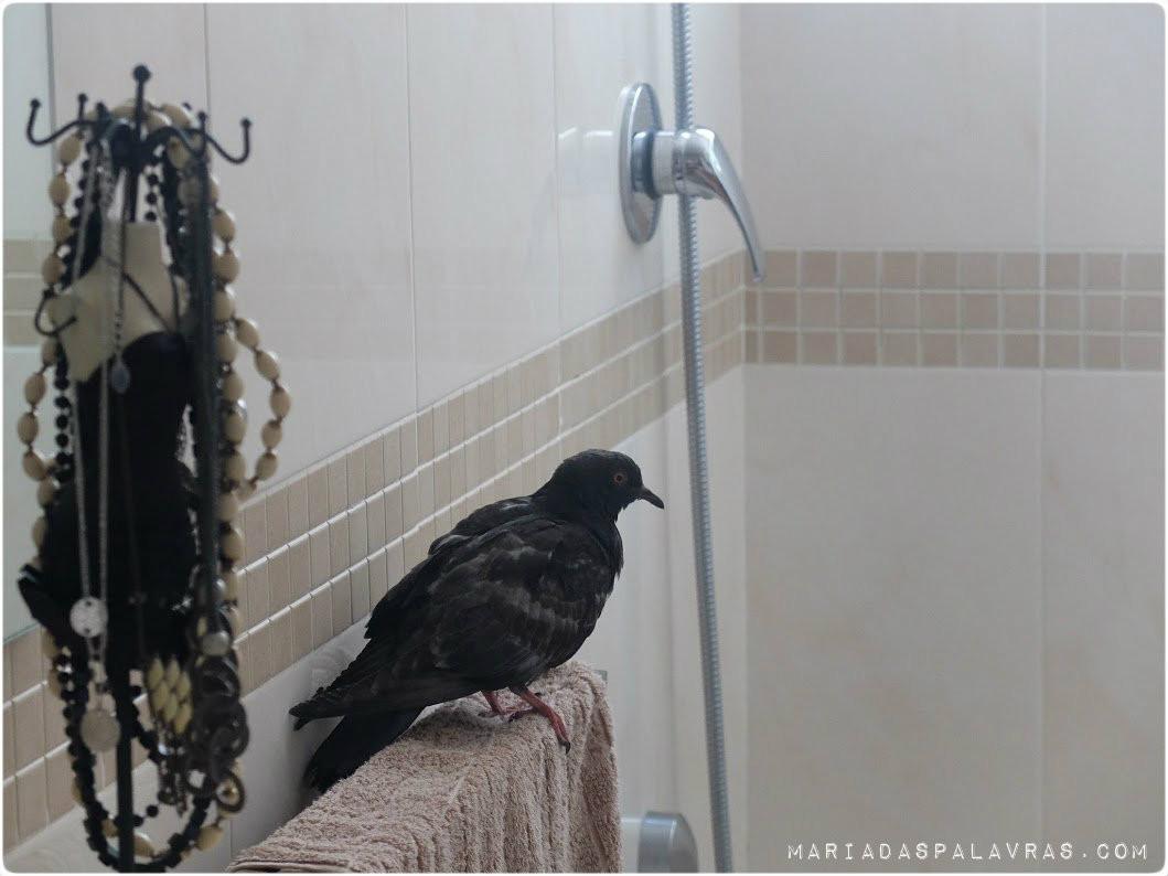 O pombo faz uma tour à casa da Maria das Palavras 2