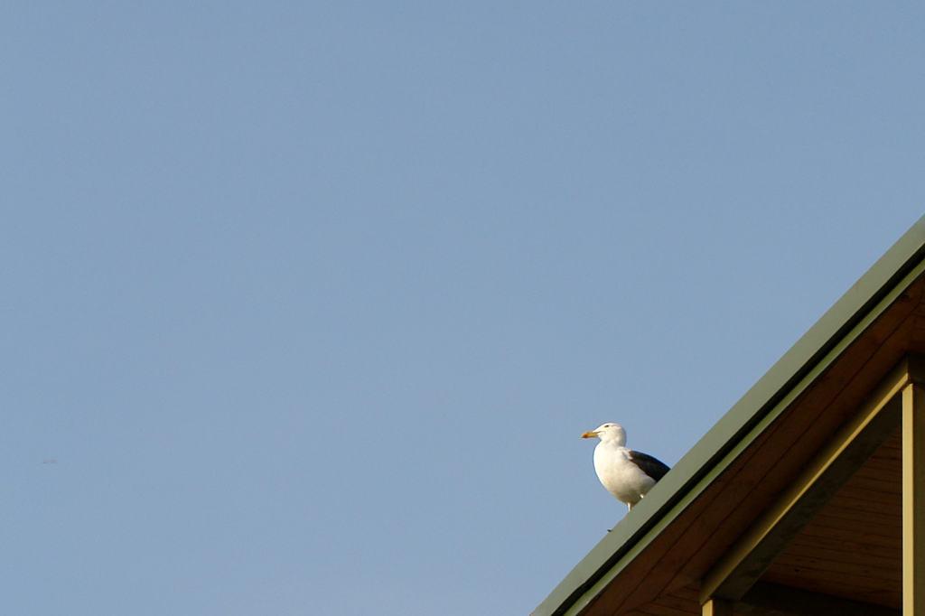 2012-08-30-17.43.28-Gaivota-no-telhado-de-casa-em-