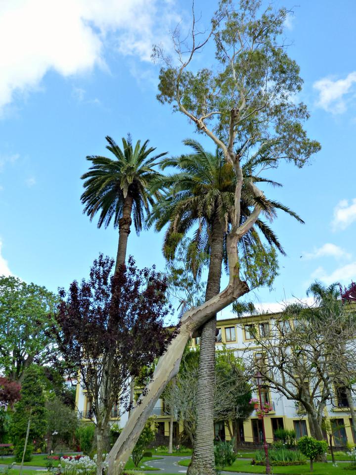 Angra - Jardim Duque da Terceira (39).jpg