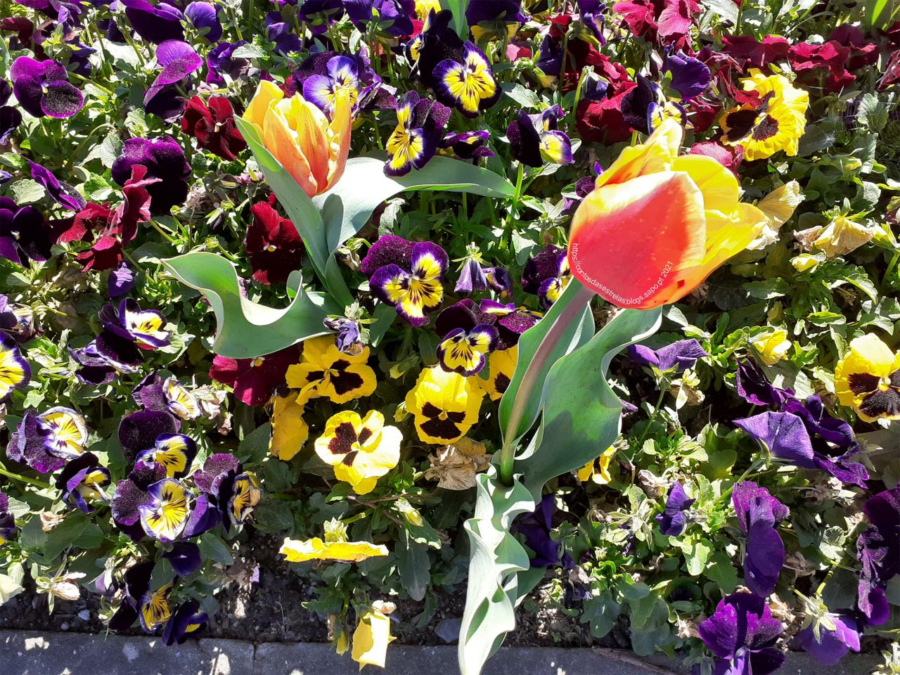 tulipas para blog.png