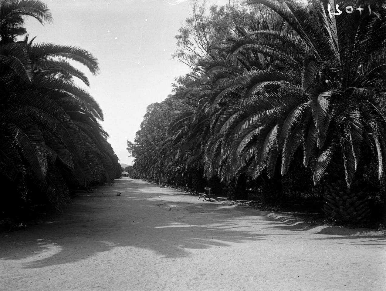 Avenida das Palmeiras, no jardim do Campo Grande,