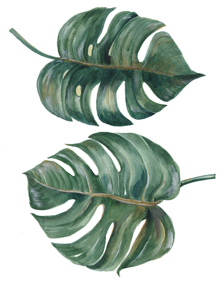 plantas-indoor-3.jpg