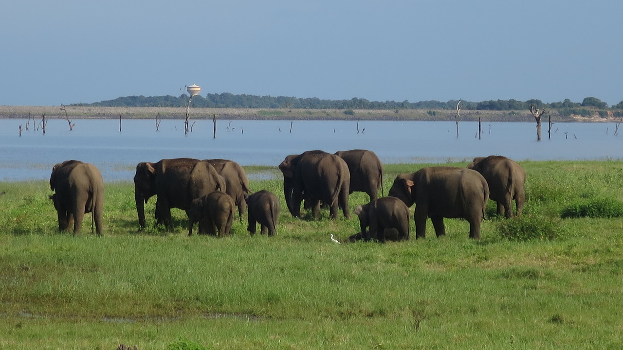 Kaudulla National Park, Sri Lanka.JPG