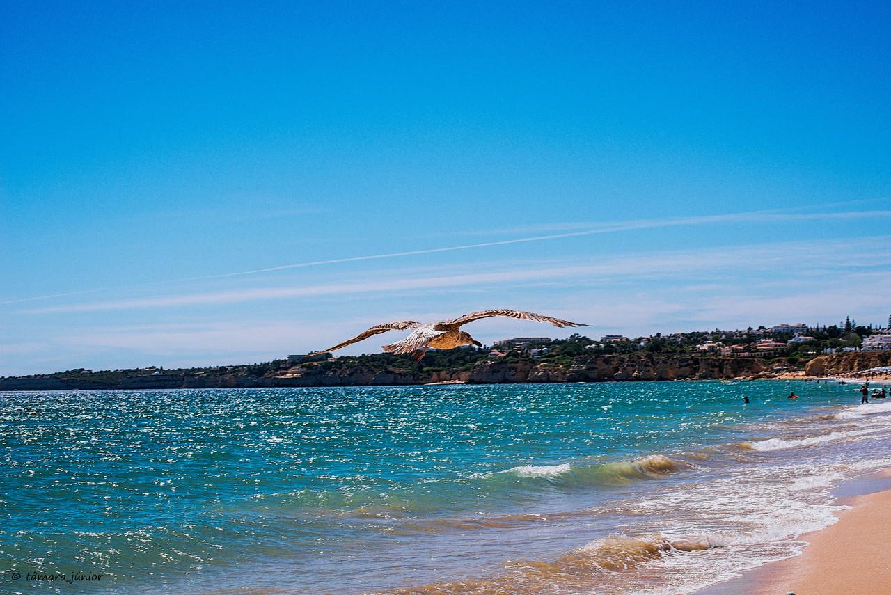 2013 - Algarve 202.jpg