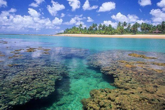 corais.jpg