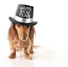 Resultado de imagem para feliz ano novo animal