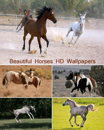 wallpapers cavalos