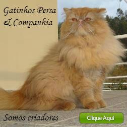 Gatinhos Persa & Companhia
