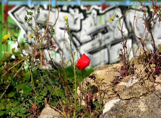 grafiti flower power