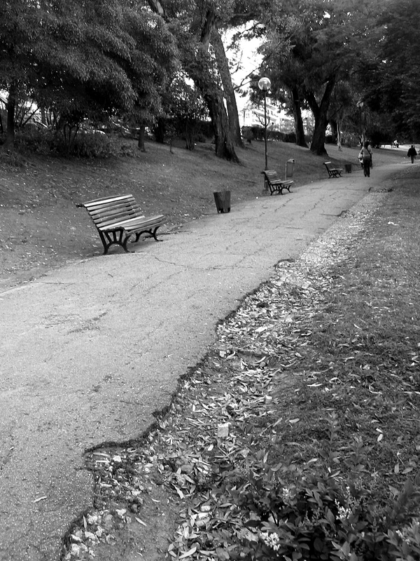 caminho no outono