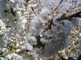 Páscoa é o anúncio da flor, da Primavera, da existência, da poesia...